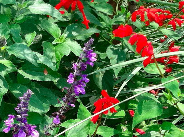 more Epcot flora