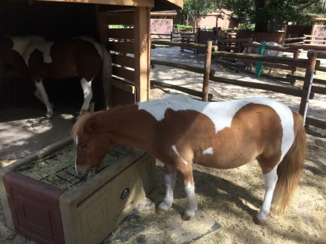 caballo que come