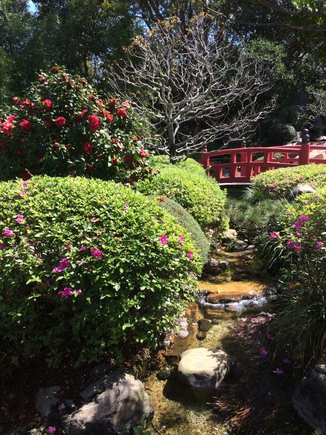 Japanese brook & bridge