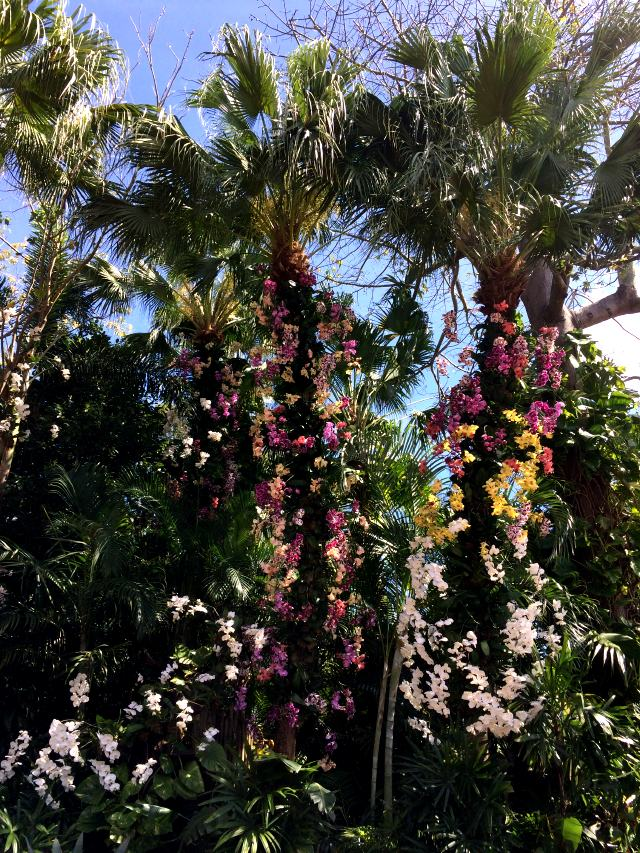 orchids in Mexico