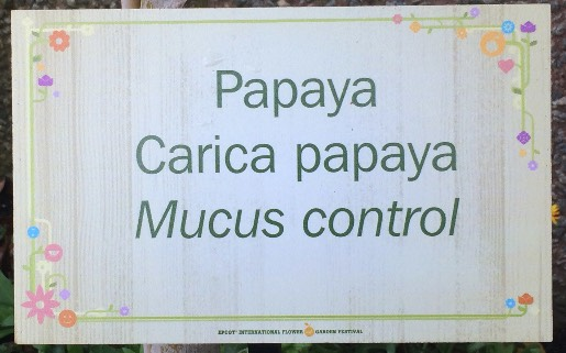 Carica papaya for mucus control