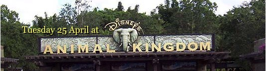 Tuesday 25 April at Disney's Animal Kingdom