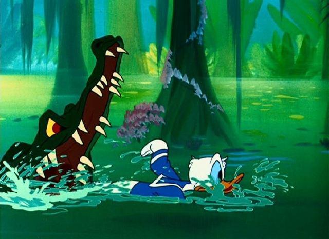 Donald & wildlife