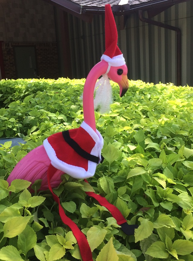 Xmas in July flamingo