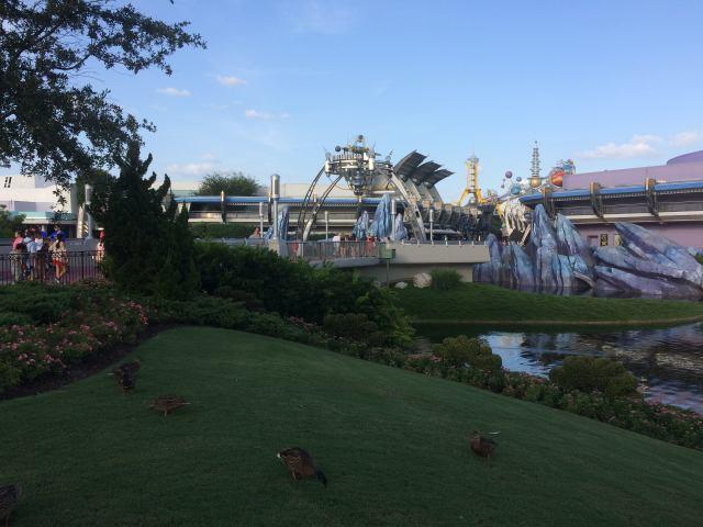 Hub Ducks & Tomorrowland