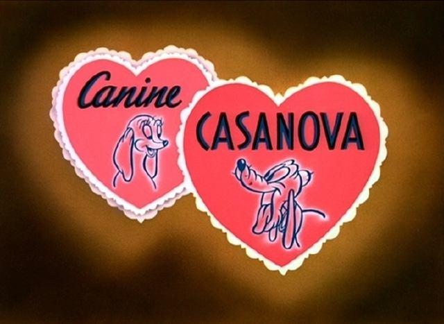 Canine Casanova