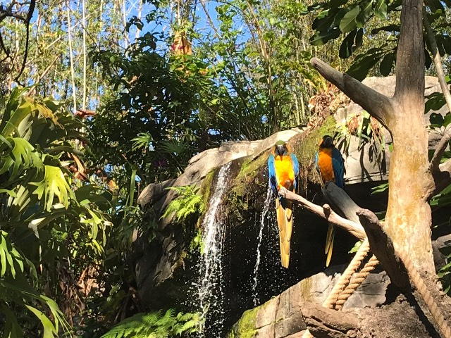 perching macaws