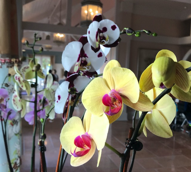 Beach Club Orchids