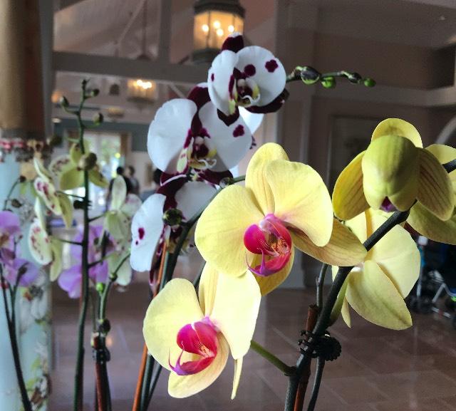 Beach Club Orchids