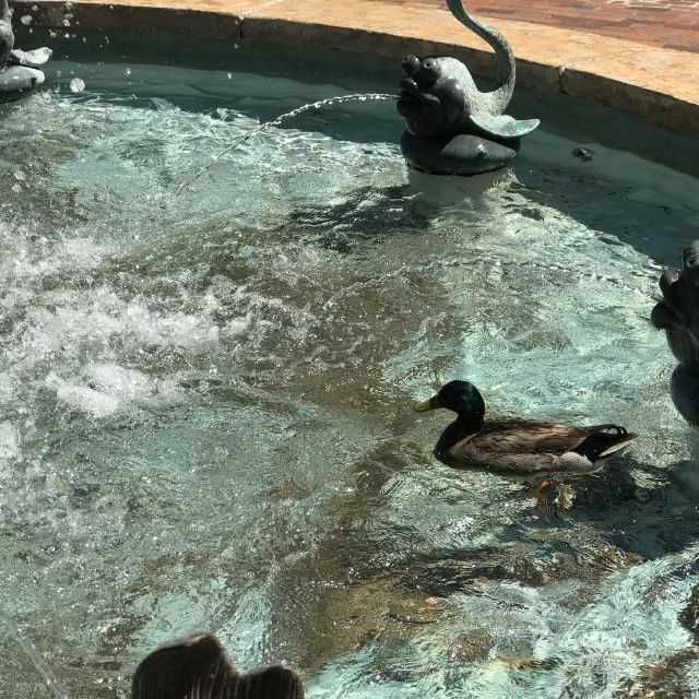 duck in said fountain