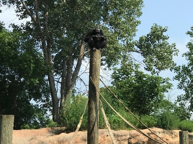 atop a pole