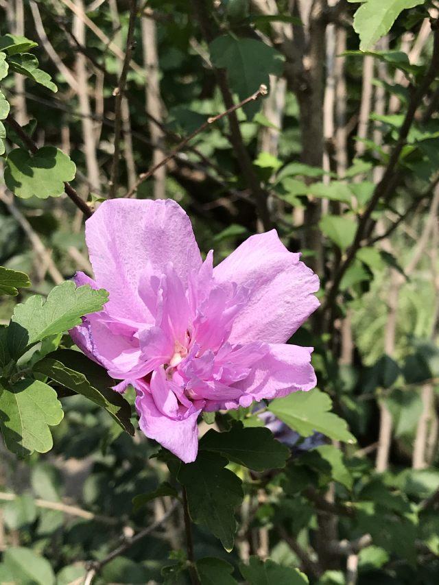 it's a pink flower
