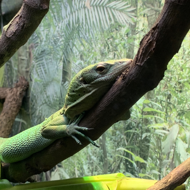 I really am the Tree Monitor.