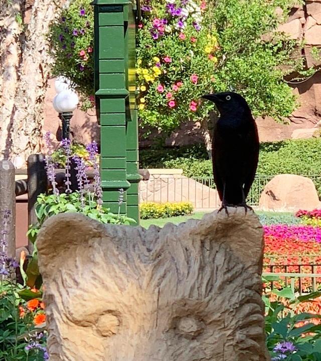 bear on a bird but closer
