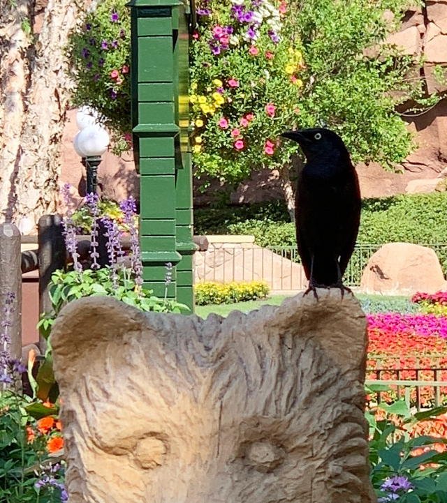 bear on a bird but closer