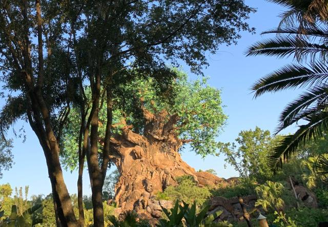 The Tree of Life, of course