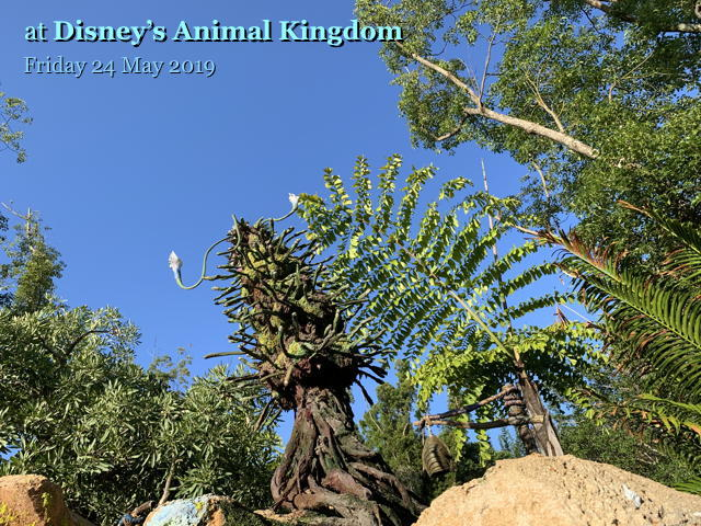 Disney's Animal Kingdom on Friday 24 May 2019
